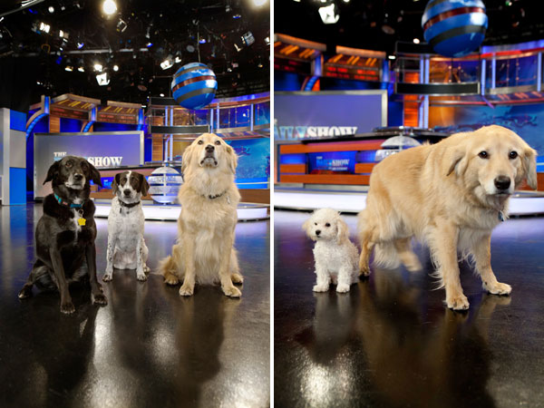 Left: Parker, Ally and Kweli Right: Teddy & Kweli on the set of The Daily Show