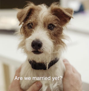 http://www.thebark.com/sites/default/files/Arthur_married-_300x308.jpg