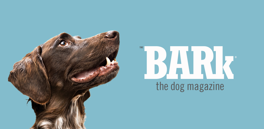 The Bark magazine - Digital Editions and Native Mobile Apps