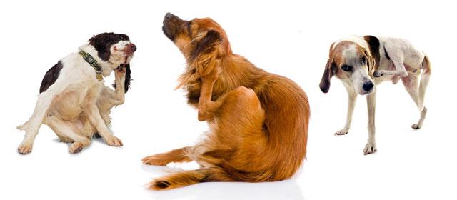 Dog S Allergies Worse At Night