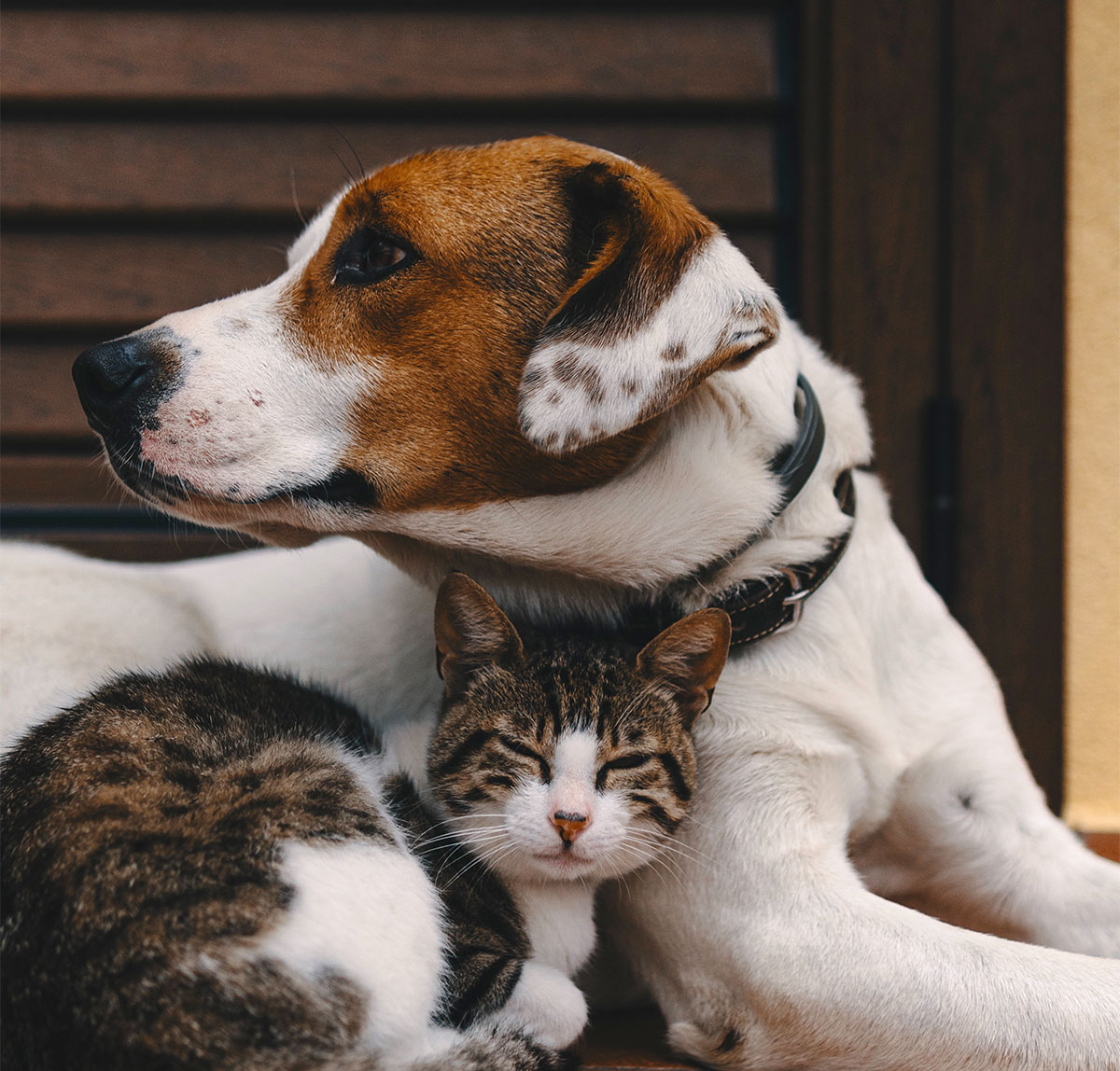 Snakebites: Why Cats Have More Lives Than Dogs | The Bark