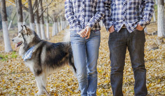 Dogs and divorce who keeps the dog the bark solutioingenieria Choice Image