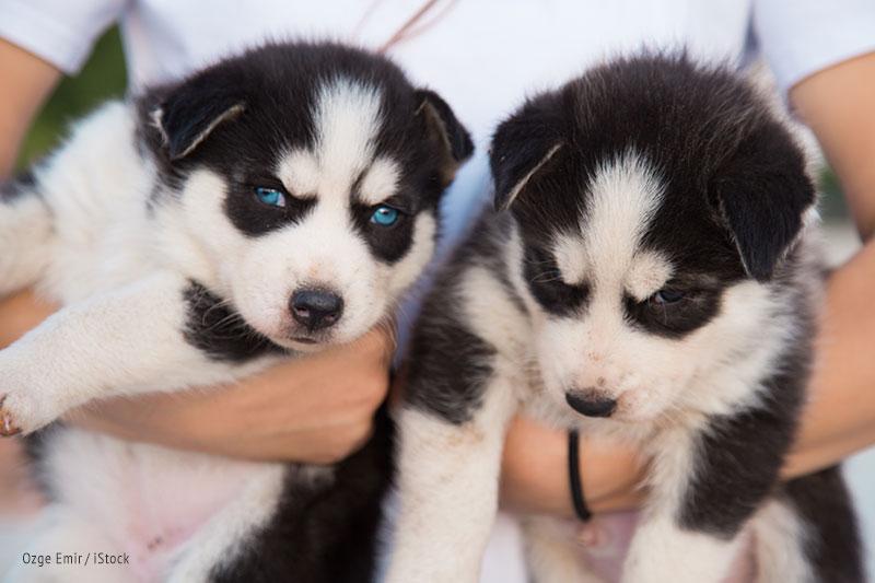 Grasp Dog Adoption