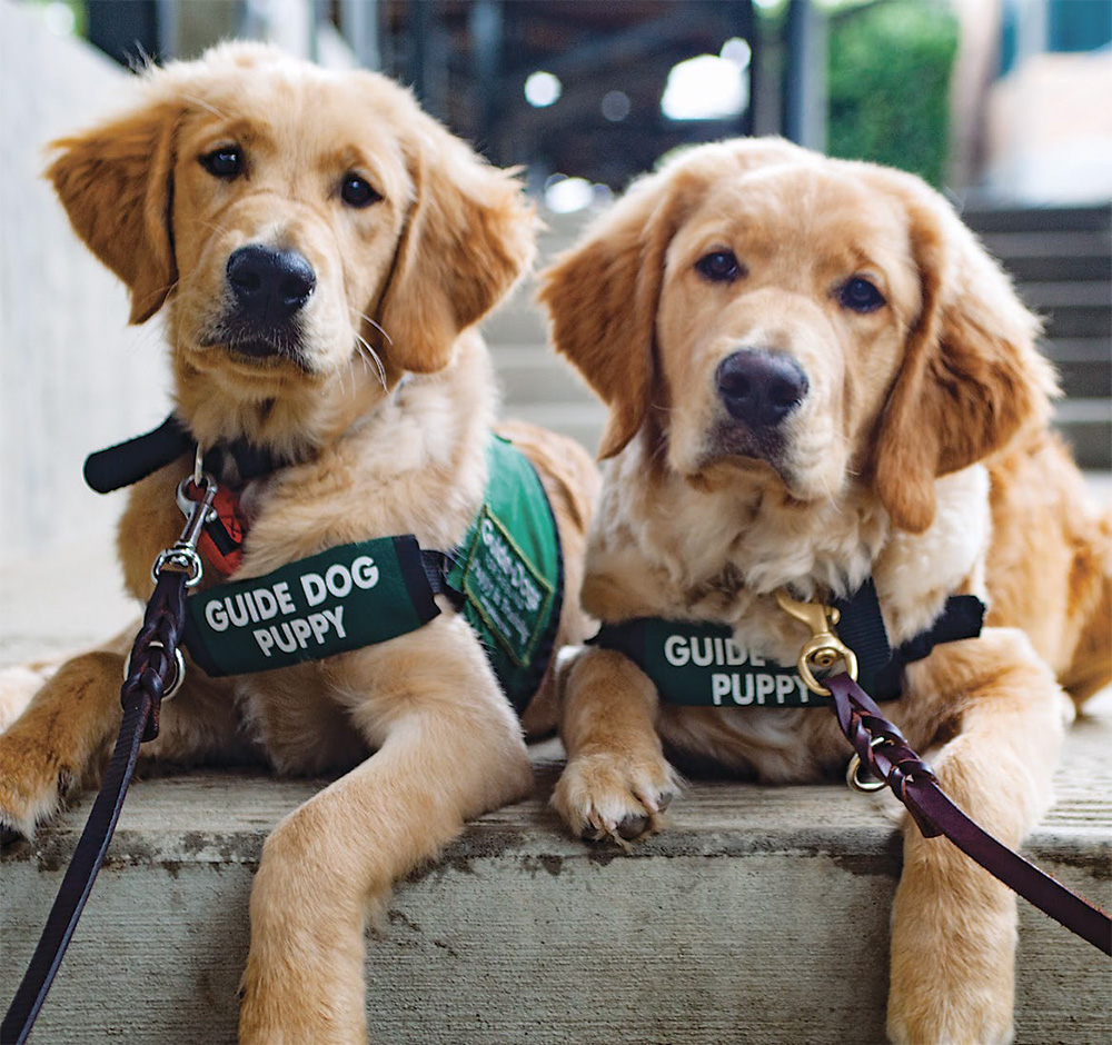 Careers | BC and Alberta Guide Dogs