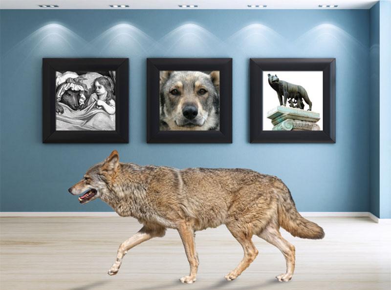 64e45838b Do Wolfdogs Make Good Pets? | The Bark