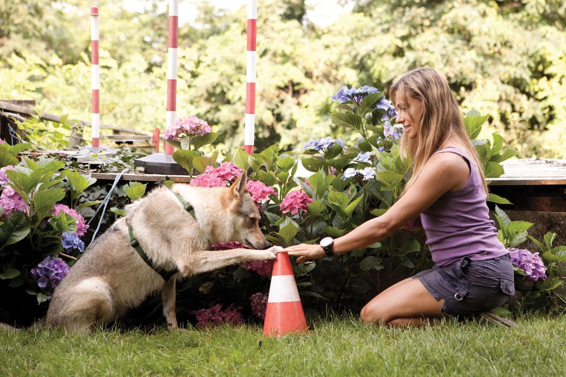 Do As I Do Dog Training Fugazza