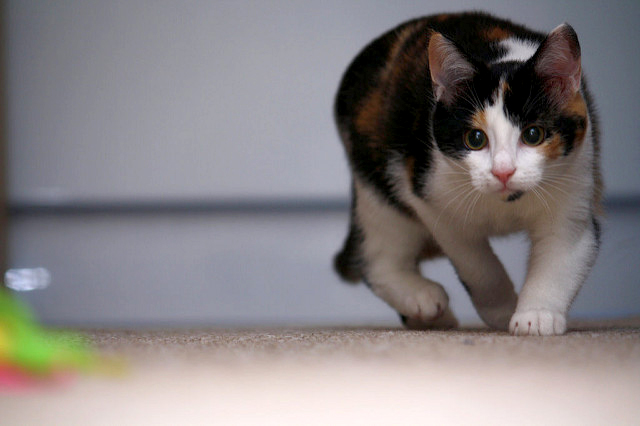 natural way to clean pet urine from carpet