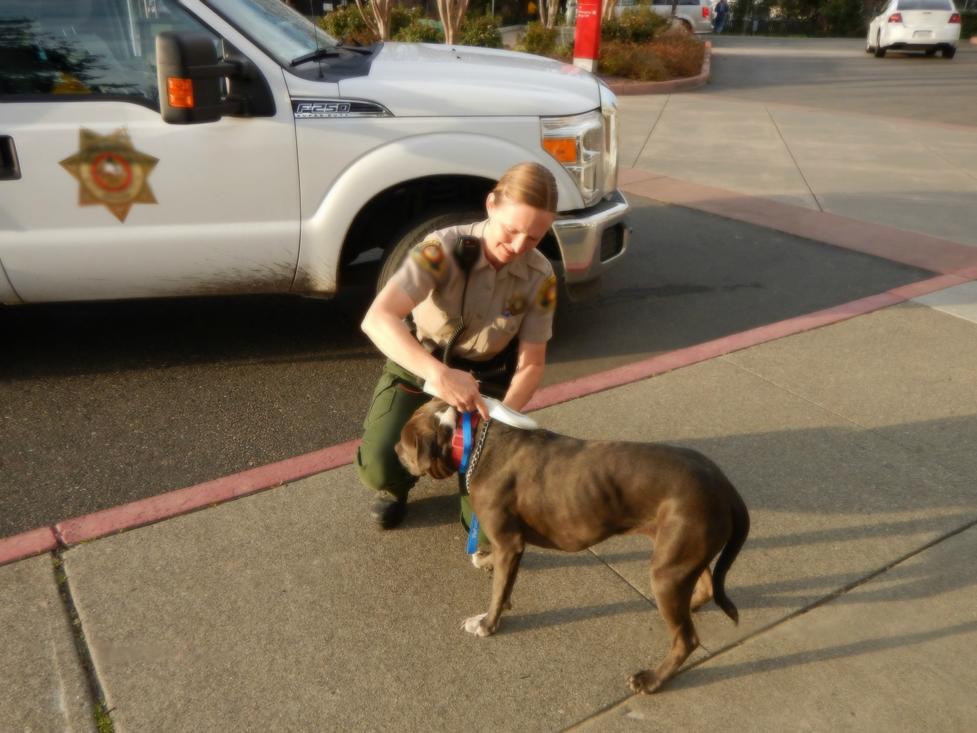 On the Job: What Do Animal Control Officers Really Do?
