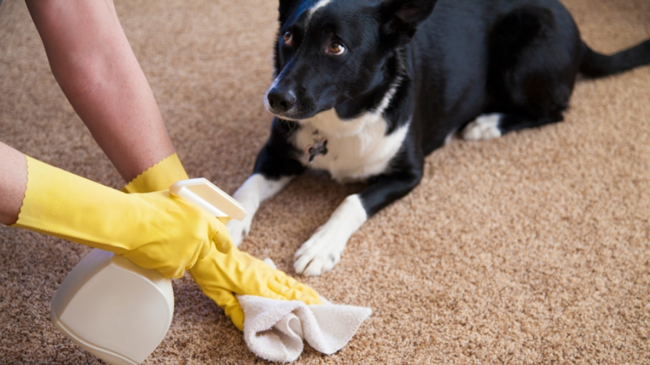 & Clean Carpet Pet Stains Naturally | The Bark