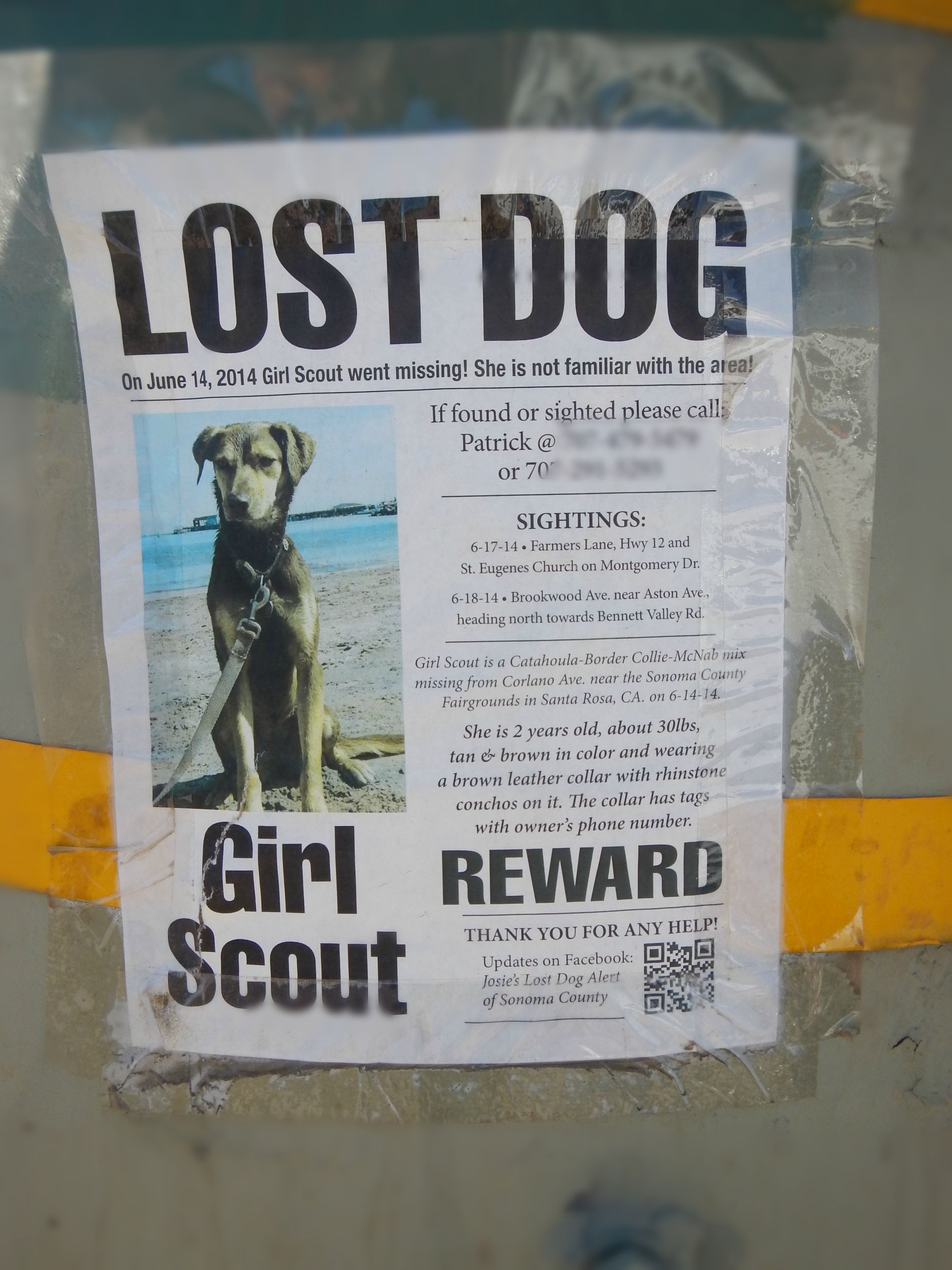 Never Give Up A Lost Dog Is Reunited The Bark