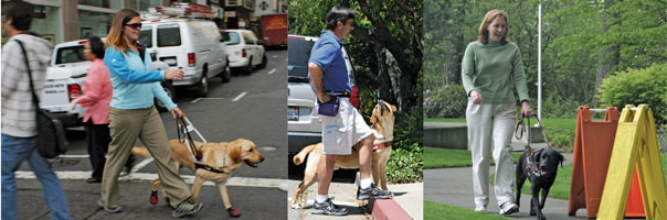 The Making Of A Guide Dog The Bark
