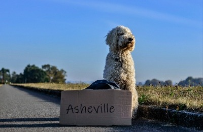 DOG-FRIENDLY TRAVEL FOR FALL