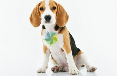 new cbd research for dogs