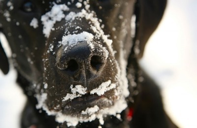 winter care - dog tips