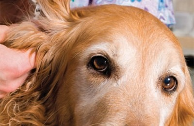 Symptoms Of Diabetes In Dogs Australia
