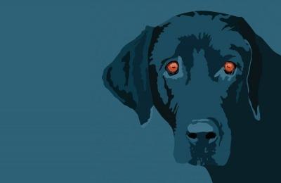 dog adoption problems, returning a dog