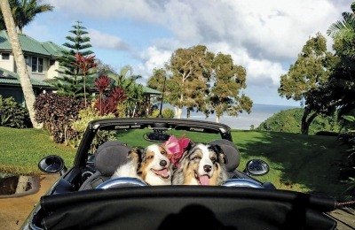 Pet sitters travel the world