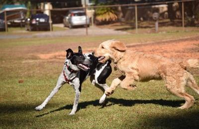 dog park socialization