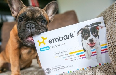 dog DNA testing - with embark