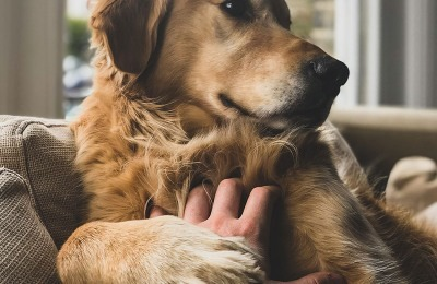 Easing Anxiety for Our Dogs