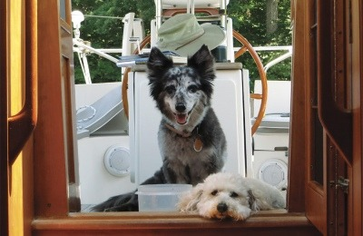 Around the time we found our first boat, Kismet, age 16, became too feeble to enjoy life, much less boat- ing, and was humanely euthanized. More recently, 19-year-old Roxie also passed; she had lived on a boat full-time for six years, and brought joy to everyone who met her. Chance, now about 10, should be with us for several more years. Sooner or later, we will no doubt rescue another dog.
