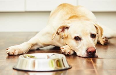 freeze dried pet food alert