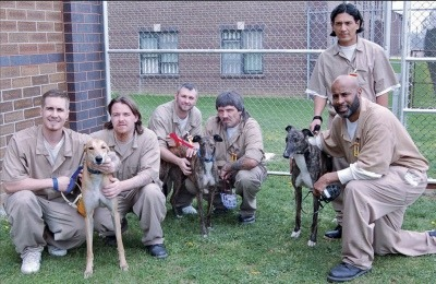 Greyhound Foster and Training Prison Program