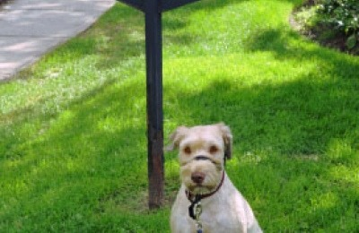 dogs_on_leash