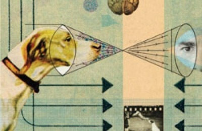 Canine Mind