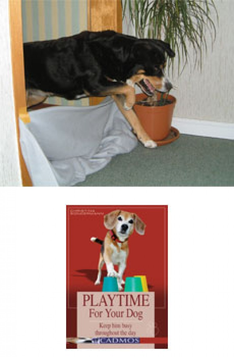 agility training for you and your dog from backyard fun to high performance training