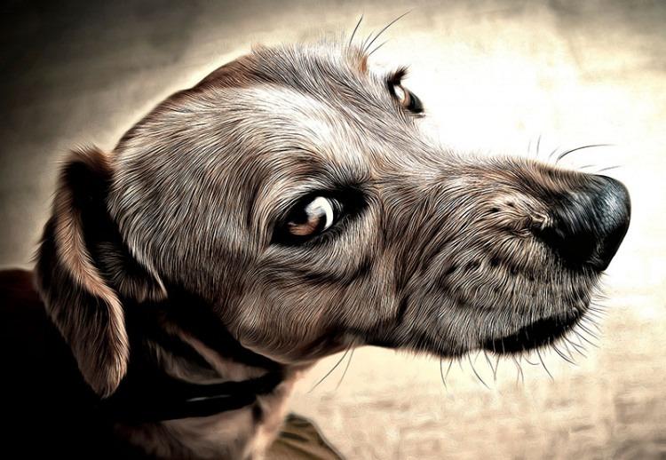 Dog With Sleep Startle Reflex
