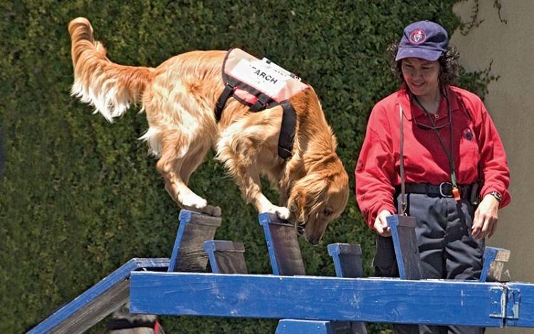 Cody training on the wobbly.