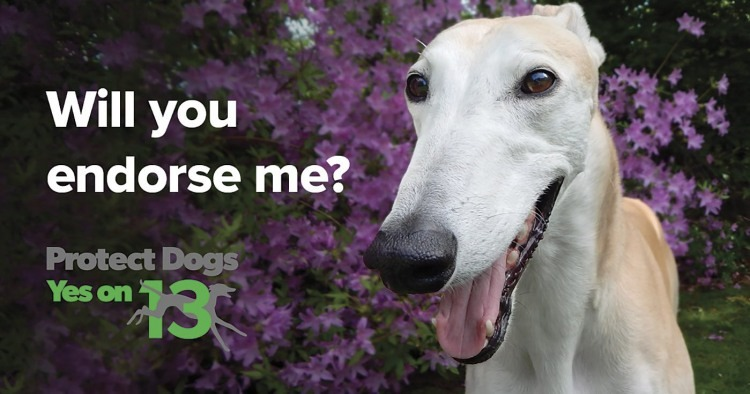 Protect Greyhounds On Amendment 13 in Florida