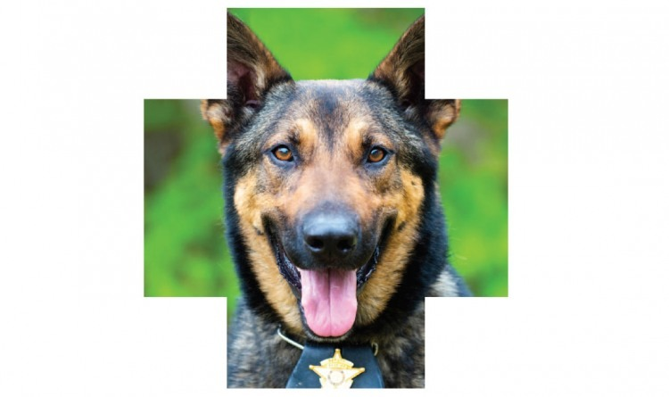 k9 Police Photo by Rob Hainer