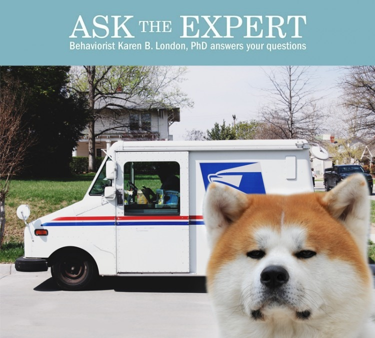 dog stares angrily at postal truck