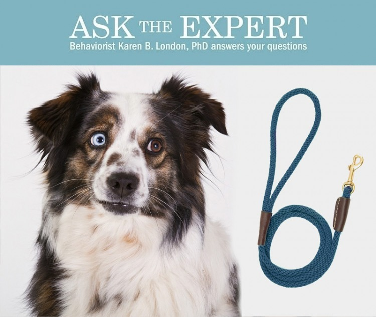 The Bark's advice columnist Karen B. London answers readers' questions about canine behavior. Got a question? Email askbark@thebark.com