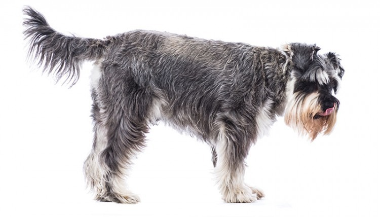 CBD For Dogs: Reasons Dogs Bark