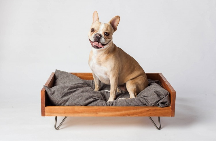 Pictured: Dog on elegant and beautiful wooden dog bed frame