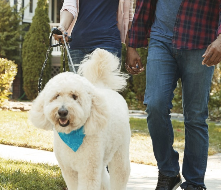 Rules for dog walking etiquette