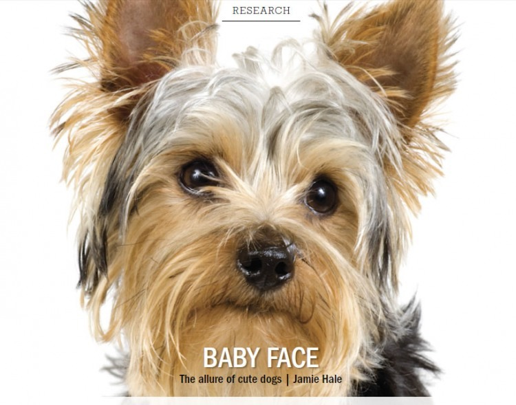 Baby Face: The Allure of Cute Dogs