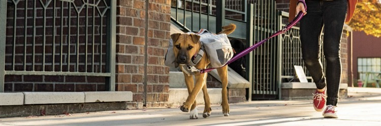 Dog Backpack by Ruffwear