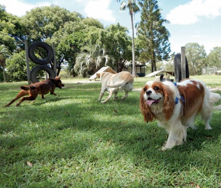 Dog Parks Rule