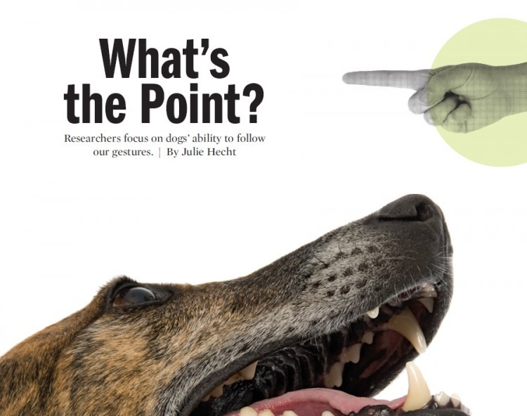 What's the Point? Julie Hecht