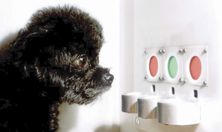 How Dogs Are Helping Researchers Cure Color Blindness The Bark
