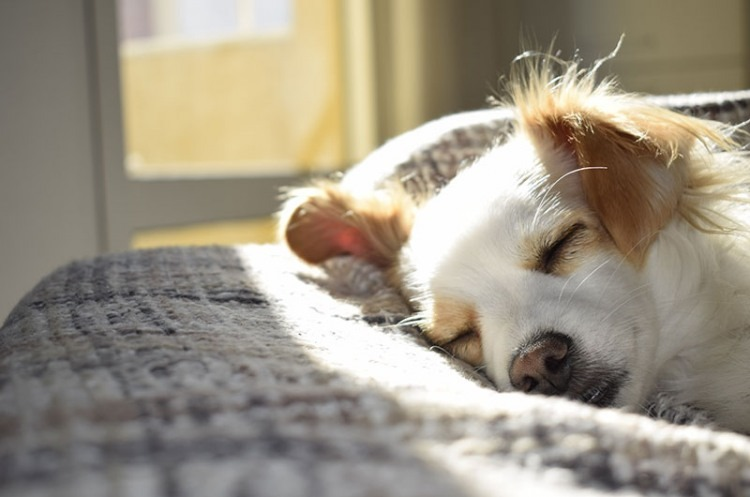 why do dogs sleep all day?