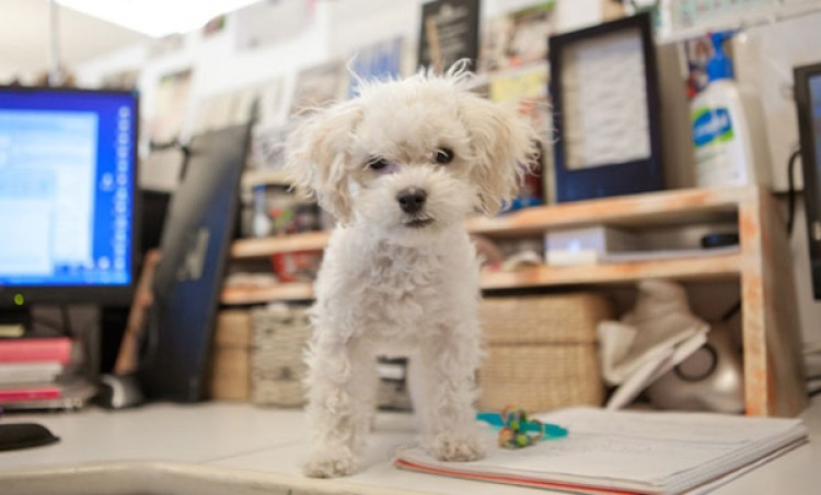 Best Practices for a Canine-Friendly Workplace