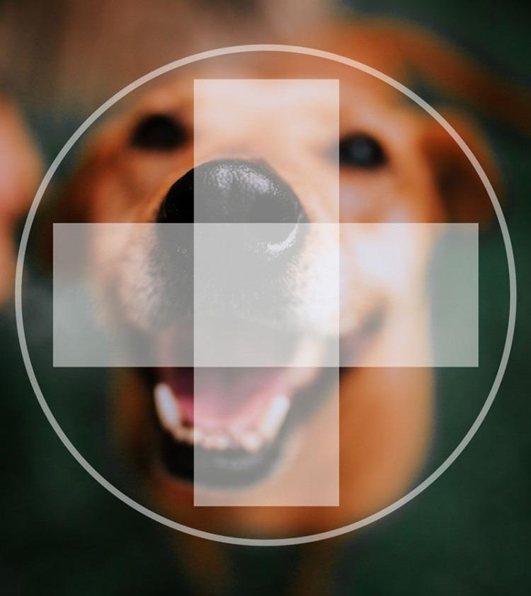 covid19 corona virus and dogs