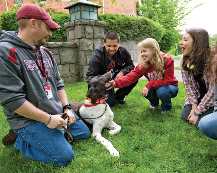 Therapy dog Bruno, with handler Jason Winters, left, gets some love from Washington State University students