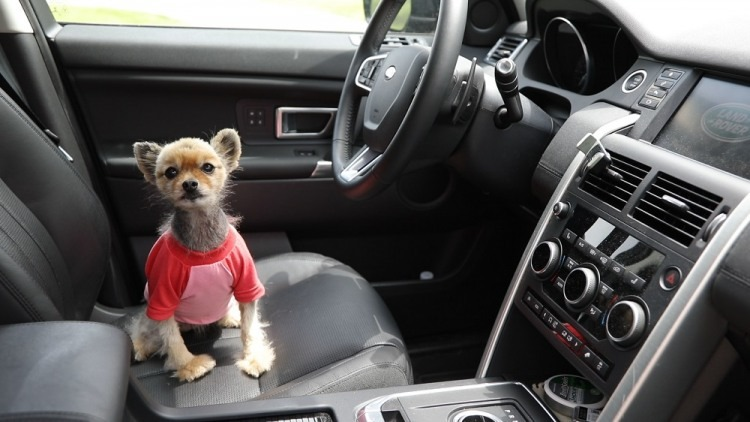 Don't leave pets inside hot cars Photo courtesy ADLF