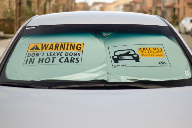 Sunscreen Warning: Don't leave dogs in hot cars! Photo courtesy ALDF